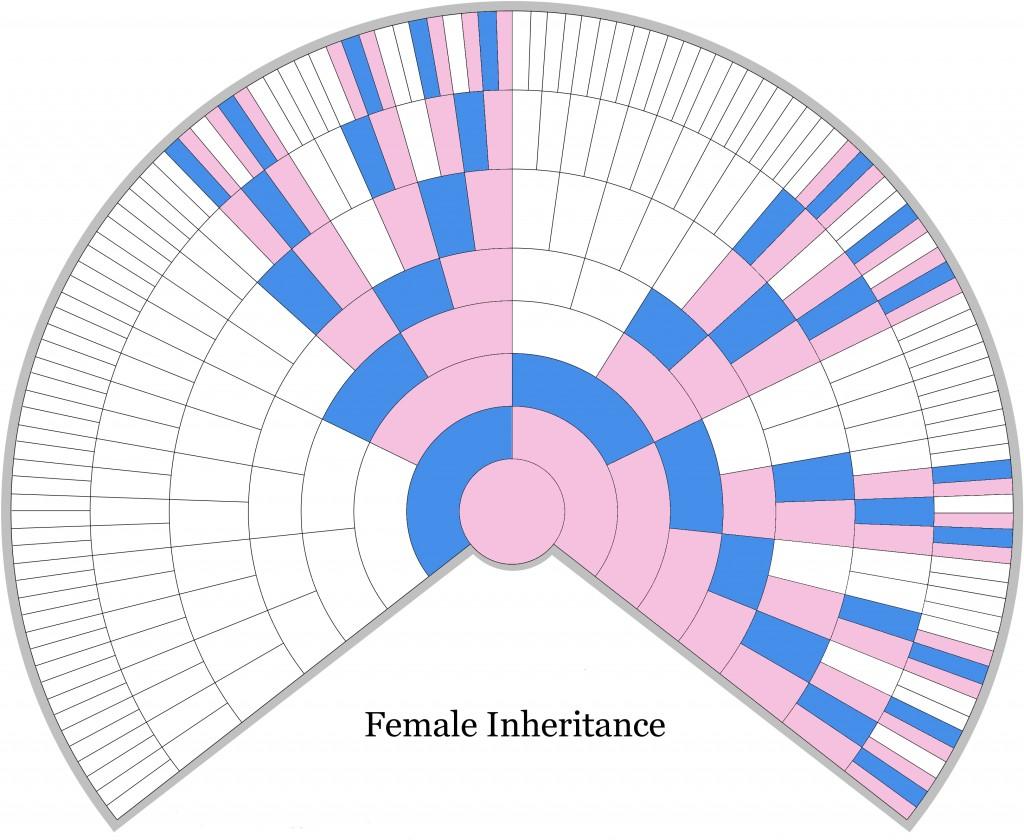 Female X-DNA Inheritance Chart