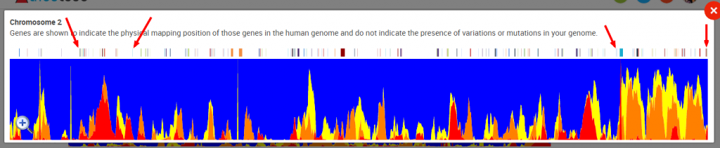 DNA Ancestry55